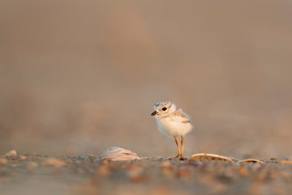Small cap investment trusts, small chick by Ray Hennessy at Unsplash
