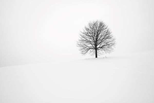 Lone tree, Woodford saga, Photo by Fabrice Villard on Unsplash
