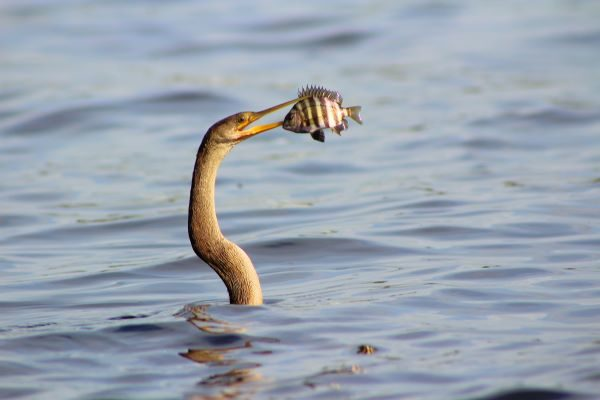 Kingfisher catching a fish. Photo by R. Mac Wheeler on Unsplash