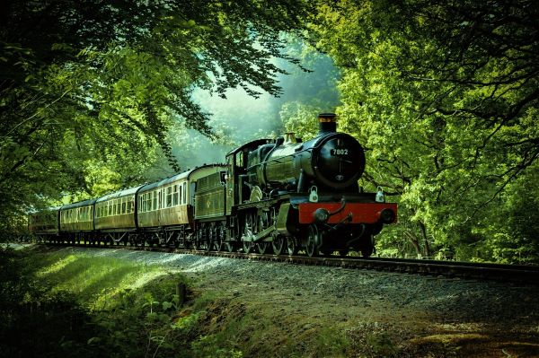 Comparing Lindsell Train's main funds, Stream train in a forest, Photo by Denis Chick on Unsplash